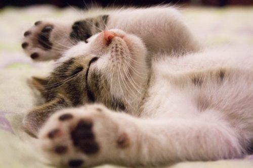 寝ているときにびくっとする