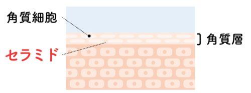 セラミド説明図